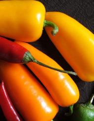 Chillies-Capsicums-Eggplants