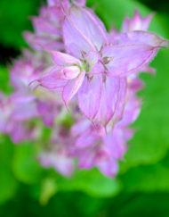 Herbs - Culinary & Medicinal
