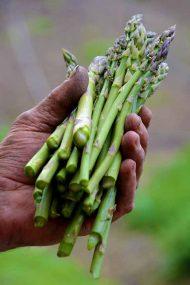 Artichokes & Asparagus