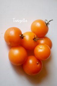 NZ Heritage Tomatoes Research varieties